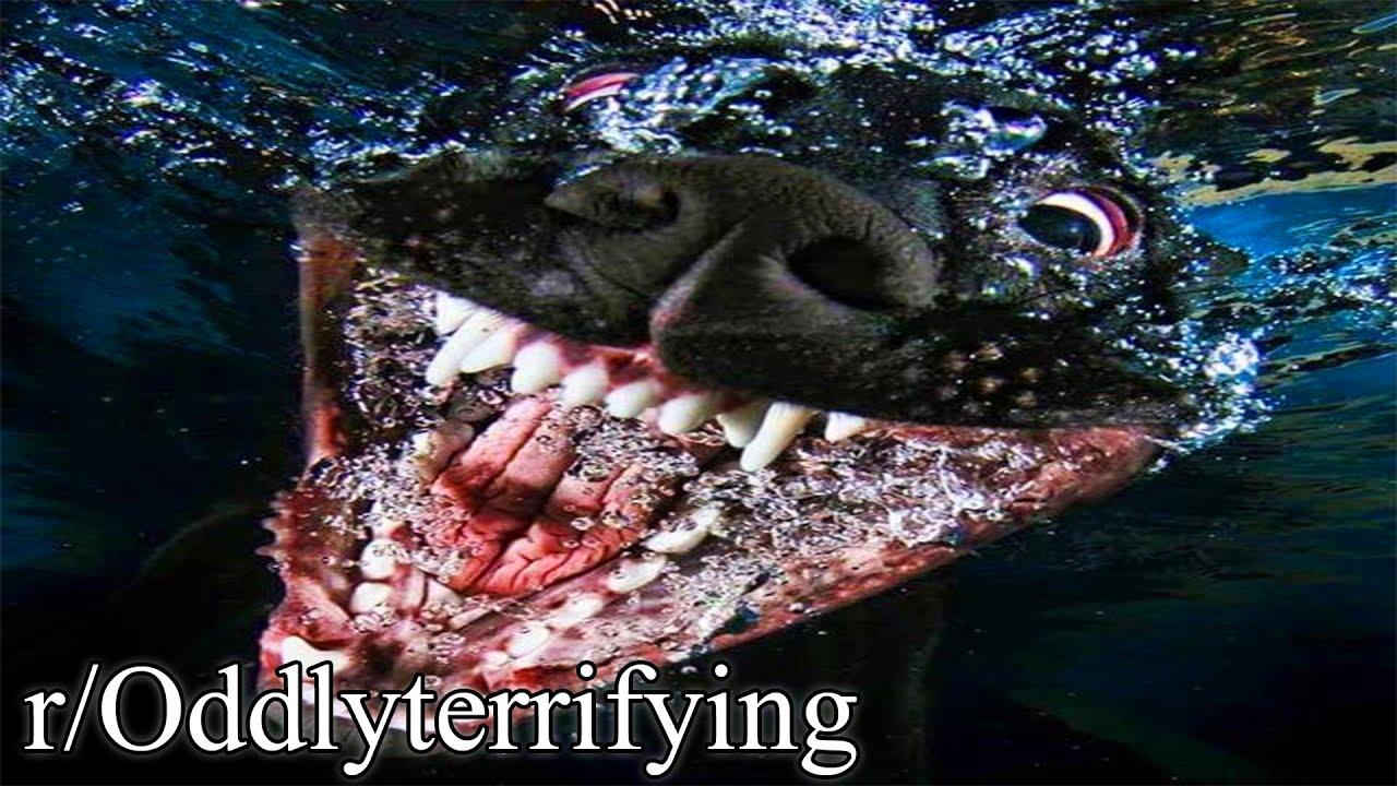 r/Oddlyterrifying | if dog was real 😱
