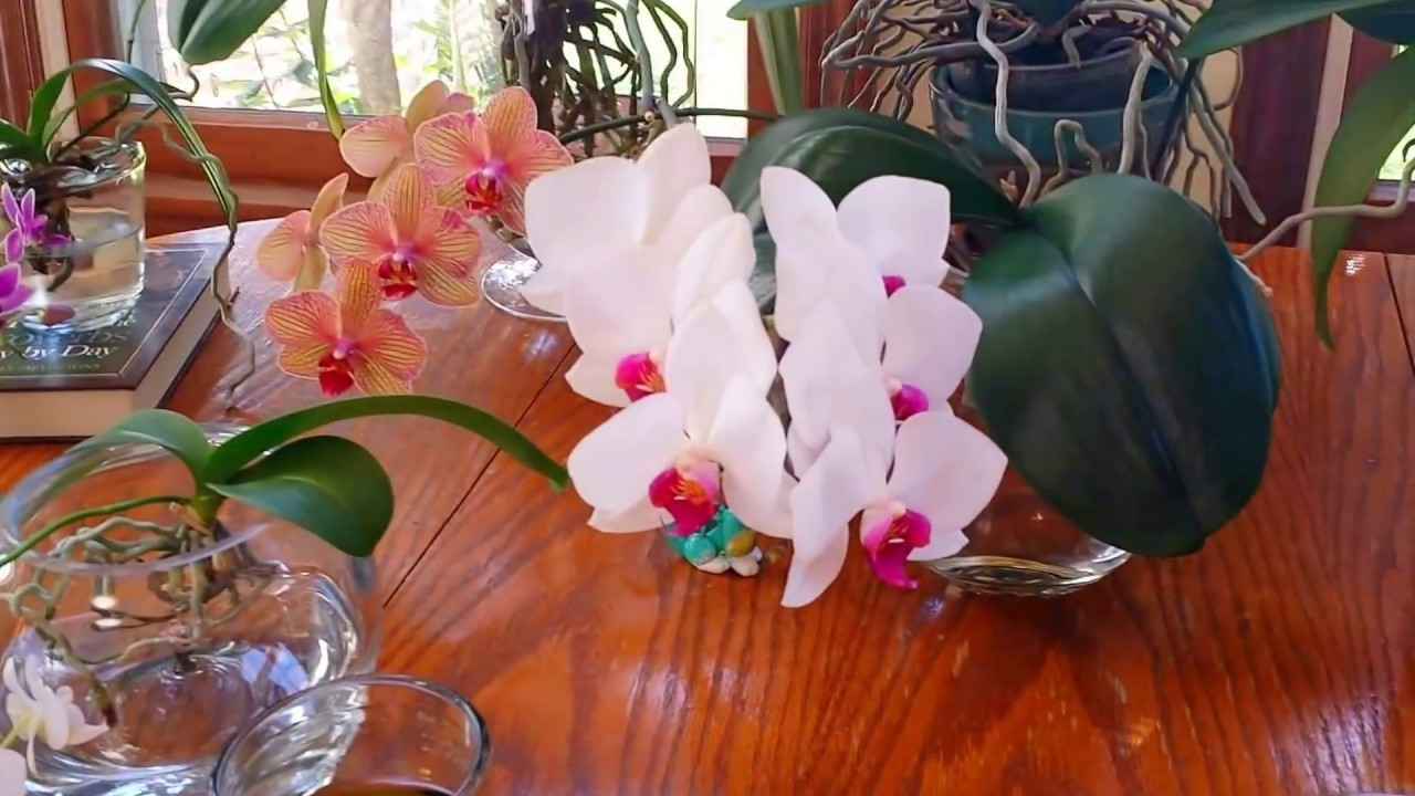 How to choose and make vases for water culture orchids how often how to choose and make vases for water culture orchids how often do i change the water reviewsmspy