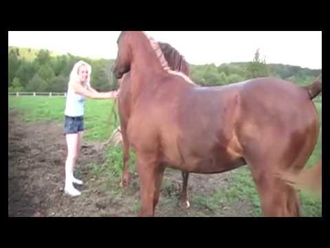 Erstaunlich Modern Farming Pferd Paarung Zucht Pairing Training Rennen Baden Künstliche Besamung