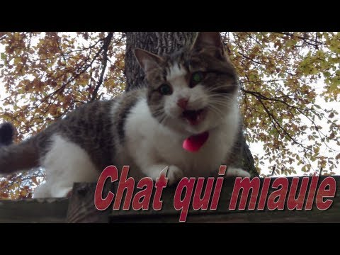 son chat qui miaule mp3 gratuit