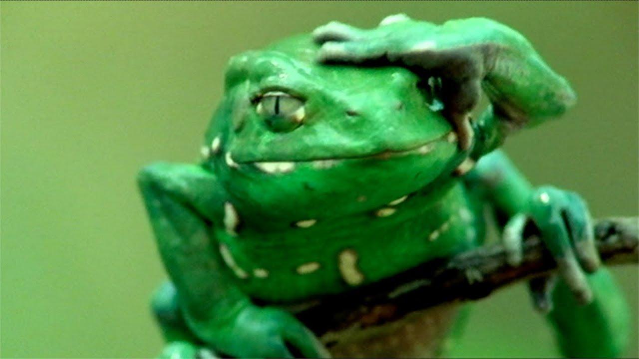 frog applies u0027sun cream u0027 natural world attenborough u0027s fabulous