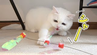 【Notice】My cat was excited to play after 4 days.