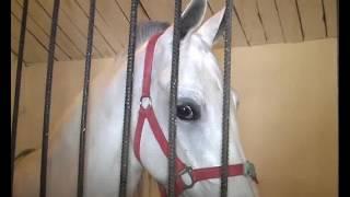 Копия Барона-1 Лошади