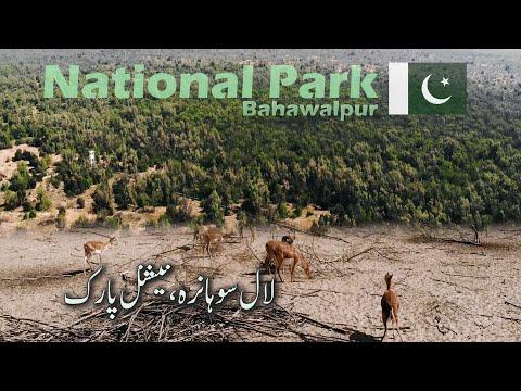 National Park | Lal Suhanra | Bahawalpur | South Punjab