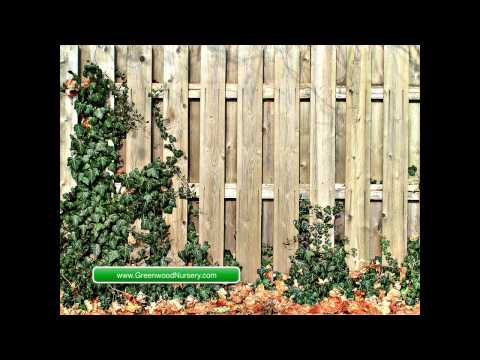 how to soundproof a backyard & Best Fence to Install for