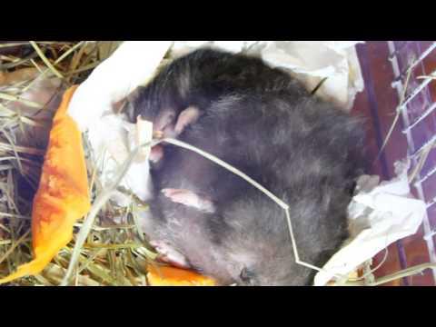 видео: Вечер перед родами