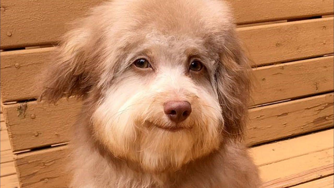 собака с лицом человека фото порода первые заработанные