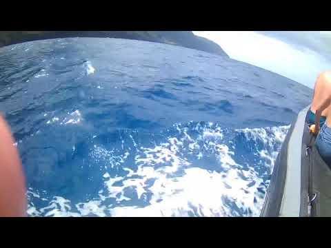 Kauai Hawaii Dolphin Swim Capt Andy Napoli Tour