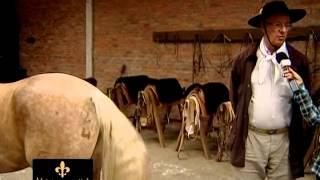 Quero Aprender A Atar A Cola Do Cavalo.