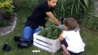 Jak sadzić zioła w skrzynce | How to grow herbs | Wood crate idea