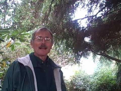 John from Weston Nurseries - Tsuga