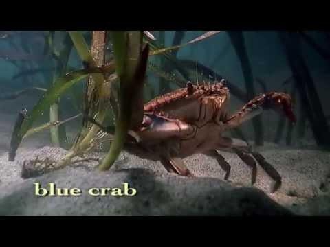 Shape of Life: Marine Arthropods - A Successful Design