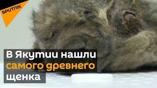 В Якутии нашли самого древнего щенка