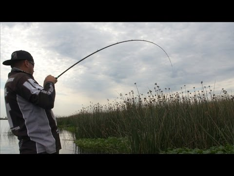Bass Punching Basics Ft. Mark Lassagne