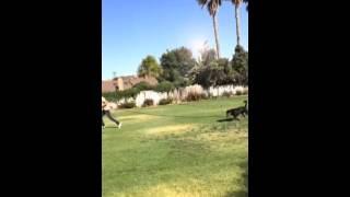 Dog Training ( Focus Training Part Ii)