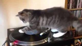 Funny Animals Fail Compilation 2013 funny pets