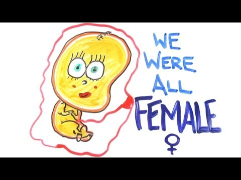 We were all female