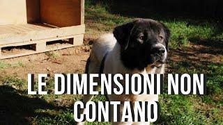 CANI DA GUARDIA Dimensioni e deterrenza
