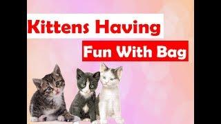 Kittens having fun with Bag - Funny kittens video 2017.