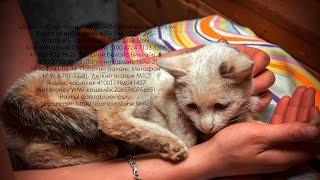 Ошейник врос кошке в кожу и мышцы безответственность хозяев  |Help the cat with an injury