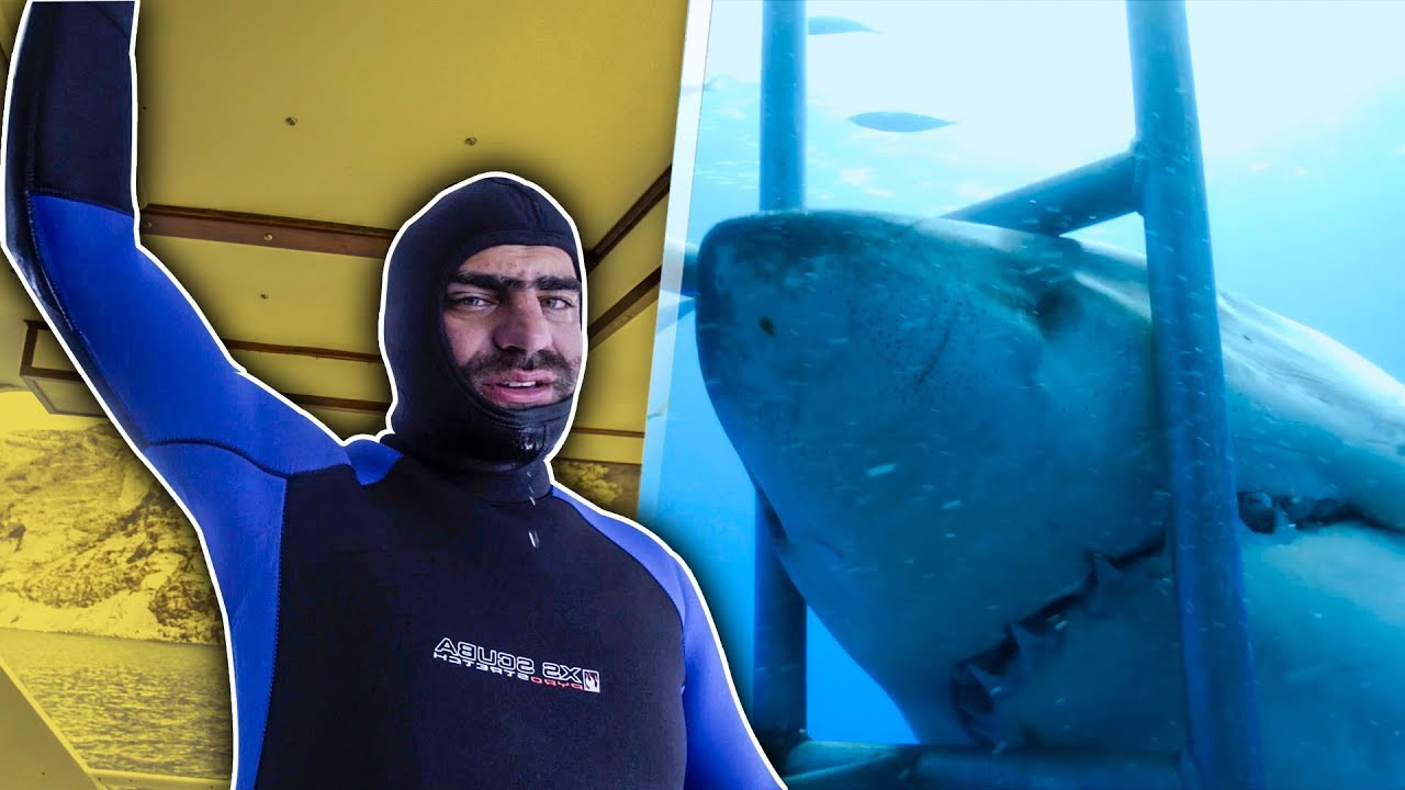 YouTubers bucean con Tiburones blancos | Juanpa, Badabun…