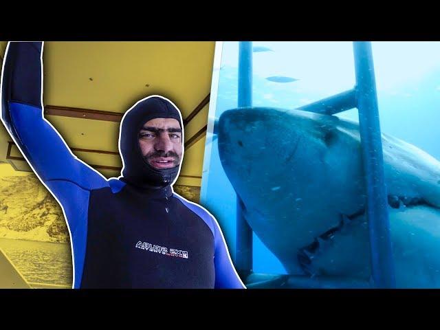 YouTubers bucean con Tiburones blancos   Juanpa, Badabun…
