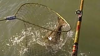 6. Irene 36in 17lb Halibut on Tigerfish