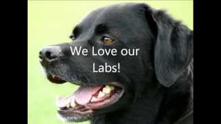 Labrador Retriever Gifts : Reviews And Suggestions