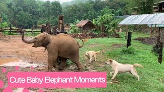 Cute And Funny Baby Elephant Videos Compilation