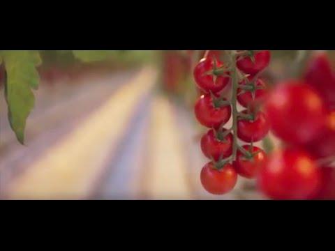 Backyard Farms - Who We Are