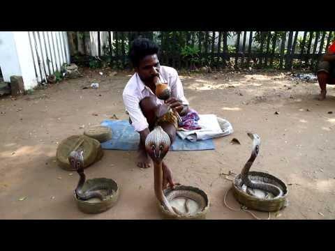 南印度 玩蛇人 片長2分鐘