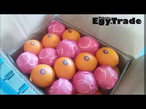 Oranges Navel and Valencia from Egypt - EgyTrade