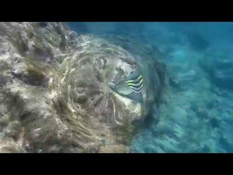Snorkeling Curacao, Playa Lagun