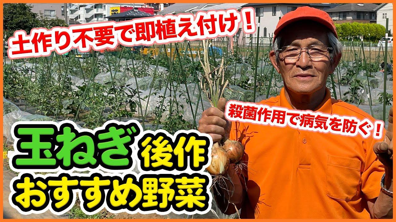 玉ねぎ収穫が終わったら!後作におすすめの野菜を紹介!連作障害を気にせず楽しめる野菜【家庭菜園】【輪作】