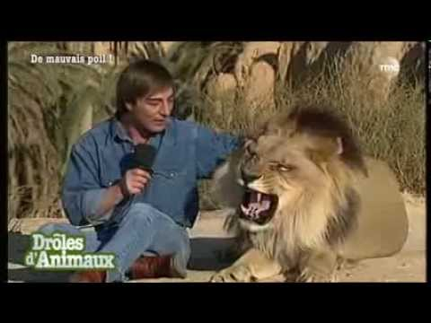 Gags animaliers dr les d 39 animaux youtube - Videos droles d animaux ...