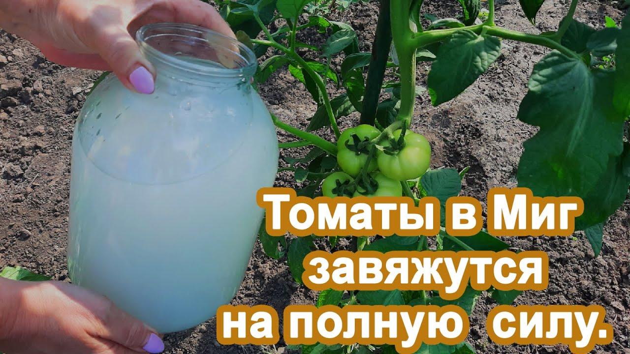 Томаты в Миг пойдут в рост Подкормка в Июне. Не пропустите и получите богатый урожай помидор.