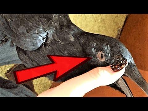 12 WEIRDEST Animal Body Features