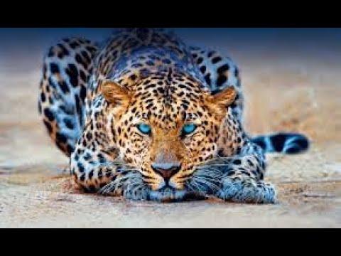 210503 International Leopard Day