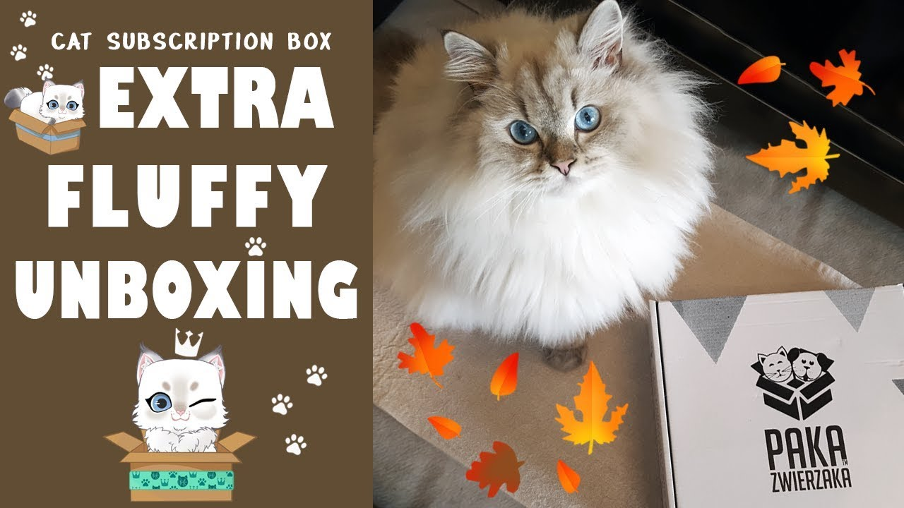 Paka Zwierzaka September 2019 😺 Extra Fluffy Unboxing 🎁