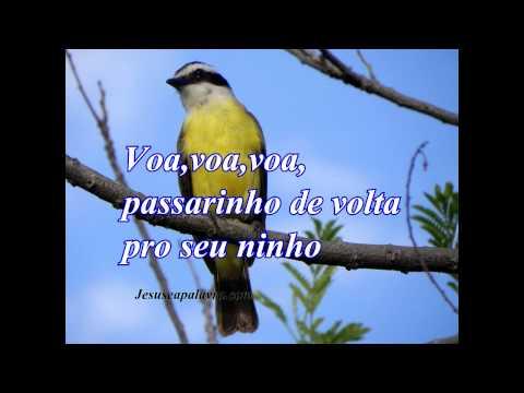 Voa voa voa passarinho