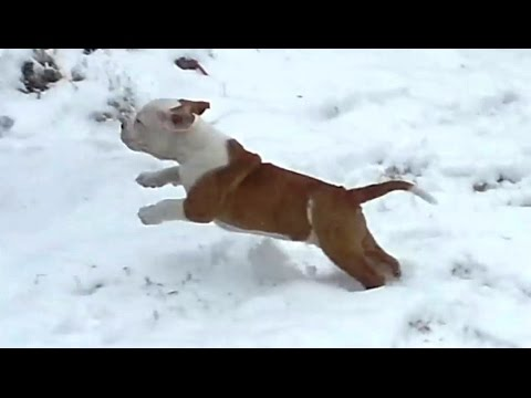 Puppies Discovering Snow For The First Time Compilation