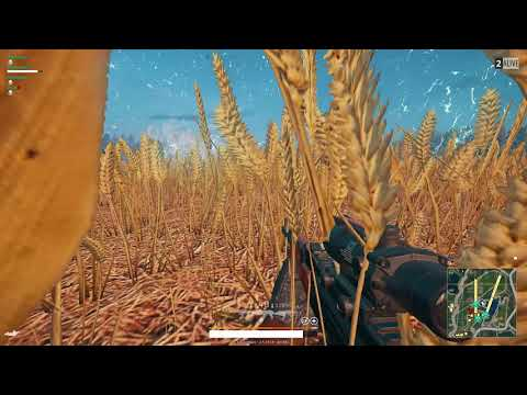 Smoked chicken party in a weed field - PUBG