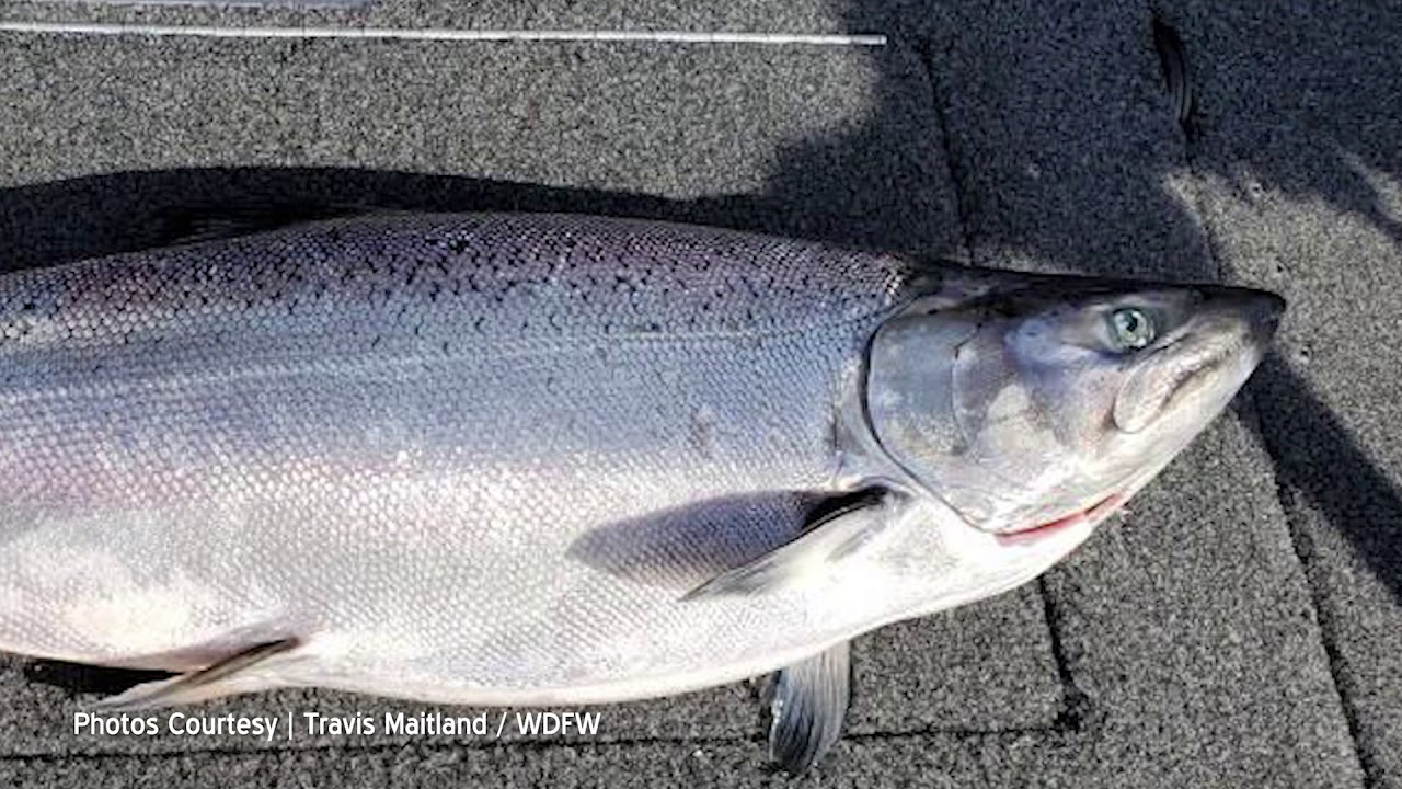 Travis Maitland on Any Concerns of Over Fishing 2019-06-27