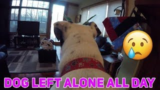 5 Dogs LEFT HOME ALONE With GoPro - HEARTBREAKING DOG VIDEOS - Pets Left Home Alone With GoPro