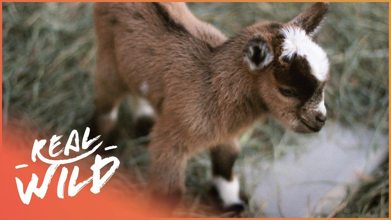 Playful Animal Babies Annoying Their Parents | Cutest Baby Animals | Real Wild