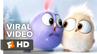The Angry Birds Movie VIRAL VIDEO - Season's Greetings from the Hatchlings (2016) - Movie HD