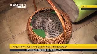 Неналежні умови для тварин у кафе з котами. ПравдаТУТ Львів