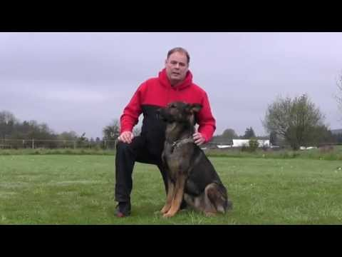 Wayne Curry presenting an IPO3 trained German Shepherd for sale