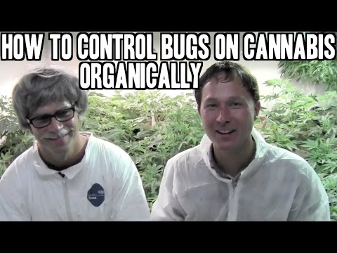 Everything You've Ever Wanted To Know About Off Bug Control Backyard Pretreat 32 Ounces hqdefault