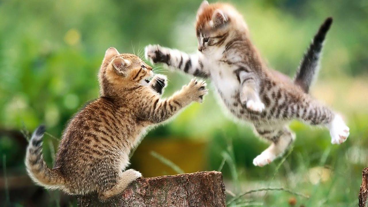 pregnant stray cats